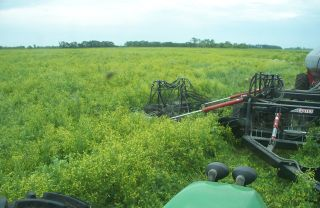 Read more about seeding into yellow clover