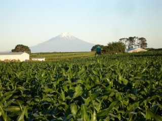 Maize_and_moutain.jpg